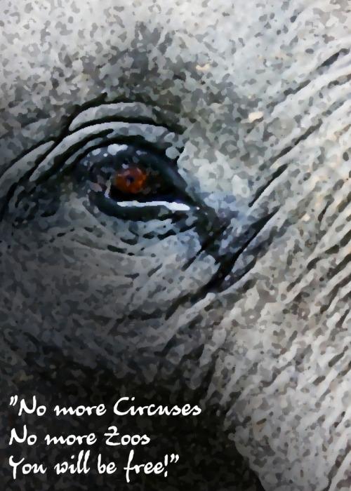 Sanctuarysong_elephant_image